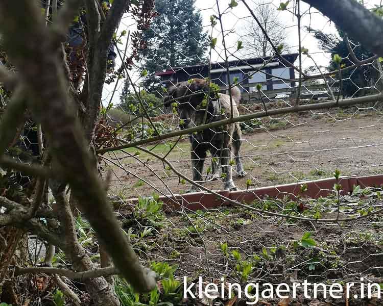 Hundegitter in der Hecke