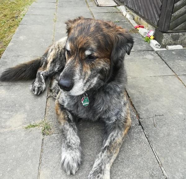 Hund reisst im Garten aus